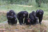Monkey family looking — Stock Photo