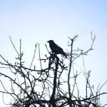 One Bird on tree — Stock Photo #2477228
