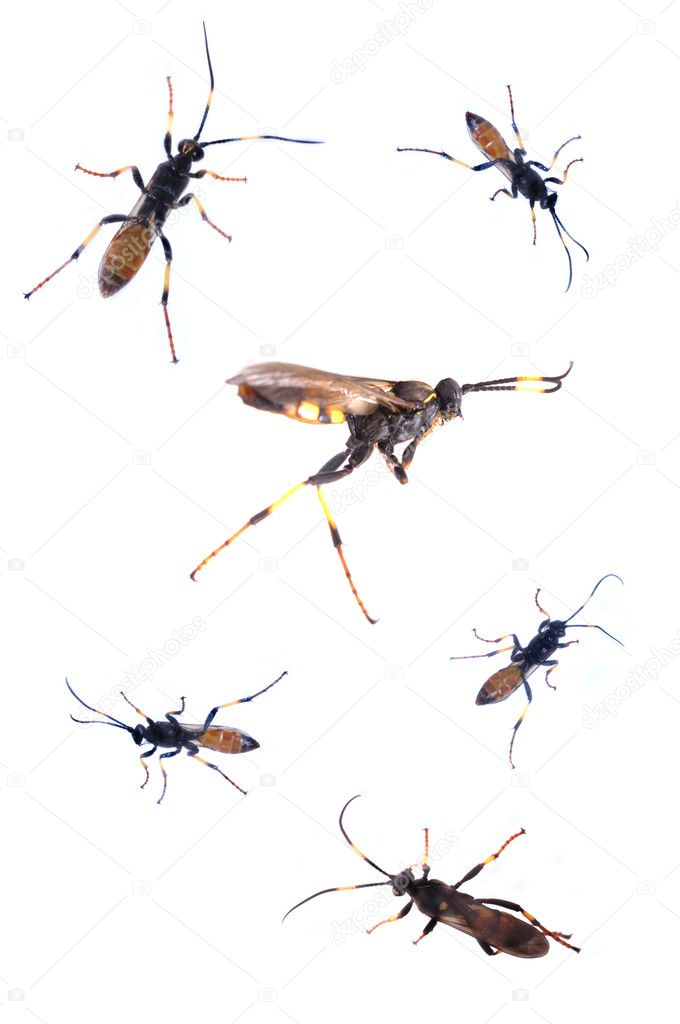 Collection of bugs — Stock Photo #2488433