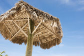 Under thatched umbrella — Stockfoto