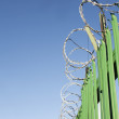 Razor wire on green fence — 图库照片