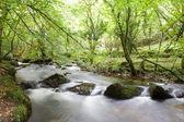 River boulders — Stock Photo
