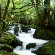 Golitha falls in Cornwall — Stock Photo