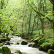 Stream through green — Stock Photo