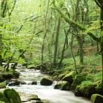Stream through green — Stock Photo