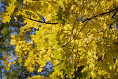 Autumnal ornament — Stock Photo