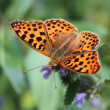 Butterfly — Stock Photo #2299956