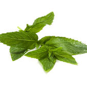 Mint — Stock Photo