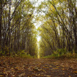 Stock Photo: Timber road