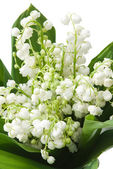 Lily of the valley — Stockfoto