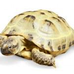 Reptile turtle animal — Stock Photo