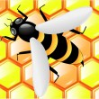 Bee on honeycombs — Imagen vectorial
