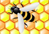 Abeille sur nid d'abeilles — Vecteur