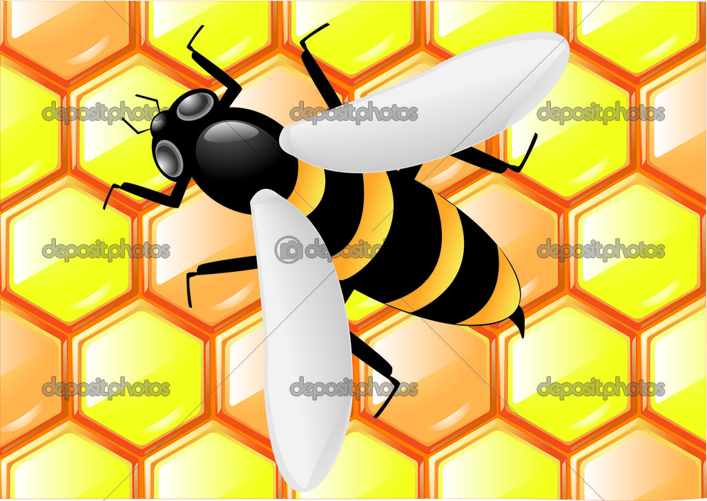 Bee on honeycombs background vector illustration — Stock Vector #1955884