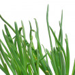 Green onion — Stock Photo
