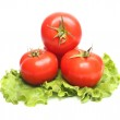 Red tomatoes and green lettuce — Stock Photo