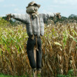 Scarecrow protecting a corn field — Stock Photo