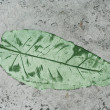 Stock Photo: Green Leaf impression