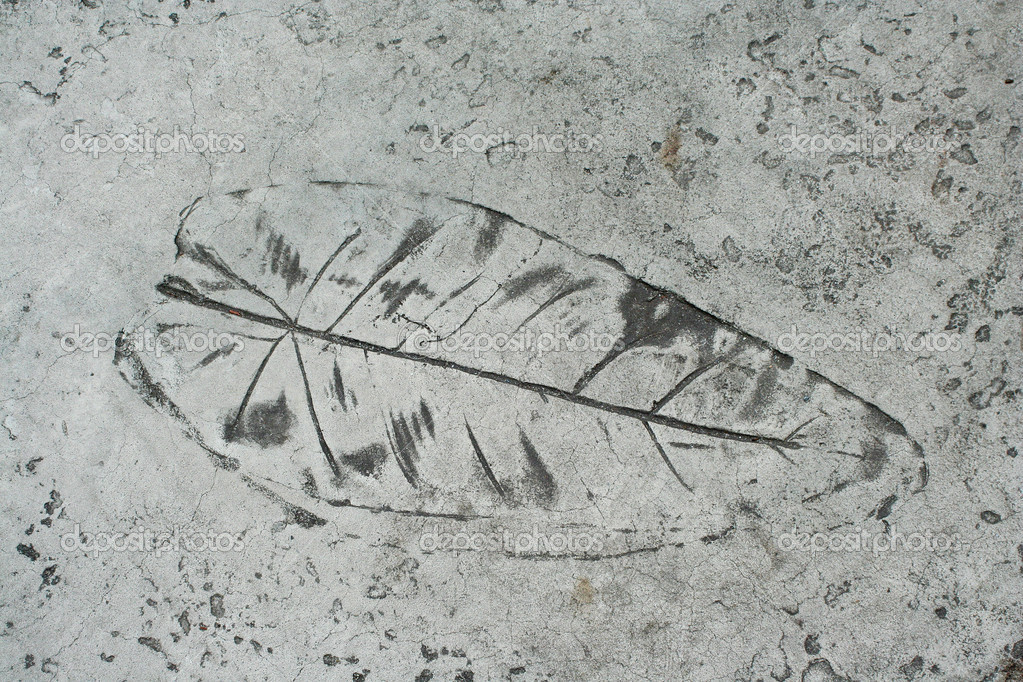 Leaf impression in a cement sidewalk — Stock Photo #2039901