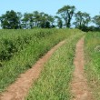 Dirt road through a farm field — Stok fotoğraf