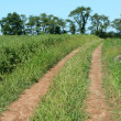 Dirt road through a farm field — Stock Photo