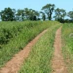 Dirt road through a farm field — Stock Photo #2040010