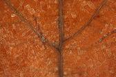 Dead brown leaf veins macro — Stock Photo