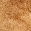 Stock Photo: Brown fur background texture