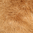Brown fur background texture - Stock Photo