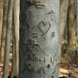 Carved sweetheart tree in the woods - Stock Photo
