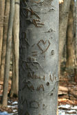 Carved sweetheart tree in the woods — Stock Photo