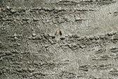 Tree bark texture abstract background — Stock Photo