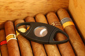Cigars with cutter — Stock Photo