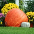Pumpkin and mums — Stock Photo