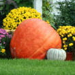 Pumpkin and mums - Stockfoto