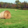 Hay Rolls in a green field — Stock Photo