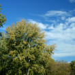 Trees against blue sky — Stock Photo