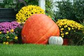 Pumpkin and mums — Stock Photo