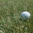 Golf ball in the rough — Stock Photo