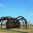 Stock Photo: Black Spider