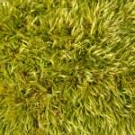 Moss — Stock Photo #2105764