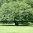 Stock Photo: Rounded Tree