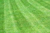 Lawnmower tracks — Stock Photo
