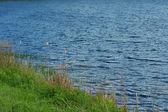 Riva lago — Foto Stock