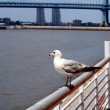Seagull on a railing — Stock Photo