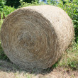 Hay Roll — Stock Photo