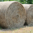 Hay Rolls — Stock Photo