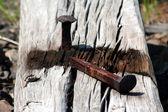 Rusty Railroad Spike — Stok fotoğraf