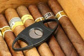 Cigars in a humidor — Stock Photo
