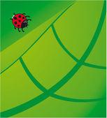 Lady Beetle — Stock Vector